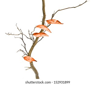 Dry branch with  leaves