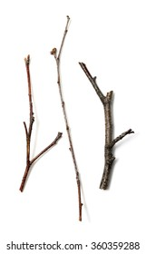 dry branch on a white background