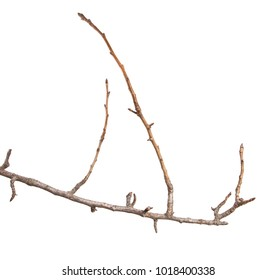 dry branch of a pear tree isolated on a white background