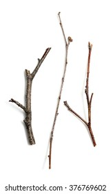 dry branch of the tree on a white background