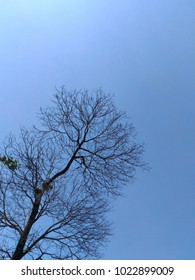 Dry branch without leaf with blue sky background.