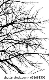 Dry branches black and white color isolate