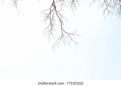 Dry branches and blue sky