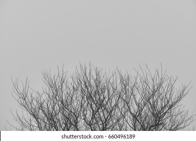 Dry branches with clouds fog background space for copy text.