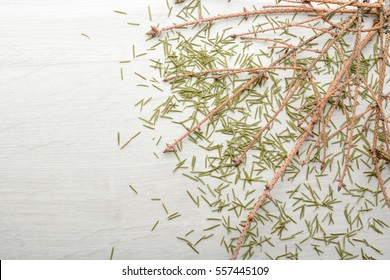 Dry branches and fallen spruce needles on the floor