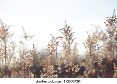 Dry branches of grass and flowers on a winter snowy field. Seasonal cold nature background. Winter landscape details. Wild plants frozen and covered with snow and ice in meadow.