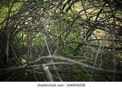 Dry branches intertwined into mesh