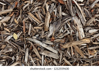 dry branches like slivers lying solid carpet