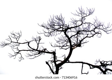 Dry branches on a white background.