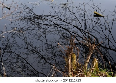 Dry branches reflecting in the water surface.
