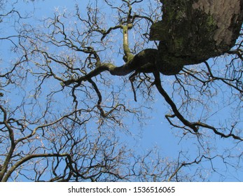 The dry branches of the trees indicate that it is still winter. Notice that these branches are fractals.