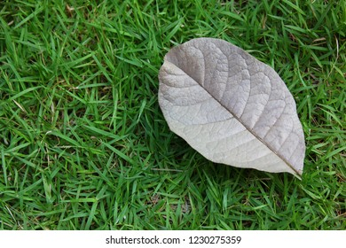 dry brown leaf on green grass