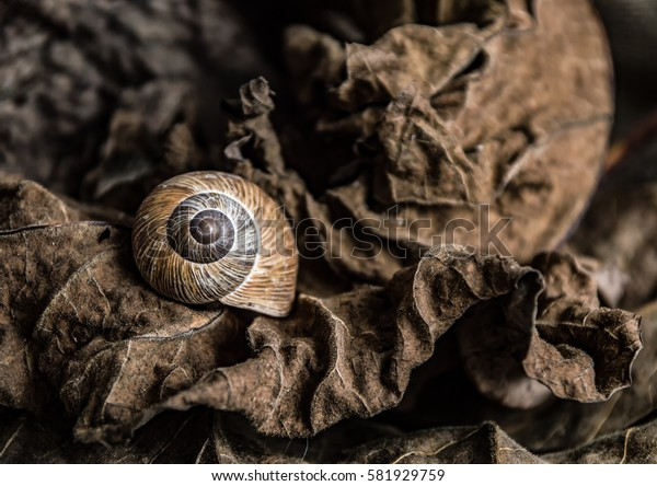 Dry brown leaves and a brown snail shell