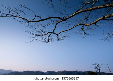 A dry brunch of tree against blue sky