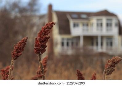 Dry buds in front of large mansion on marshland