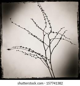 Dry bush branch ikebana with a shadow