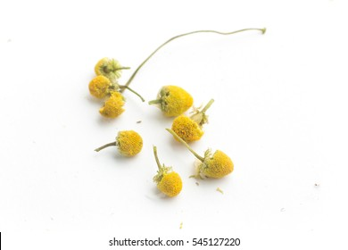 Dry Camomile Tea isolated on white background