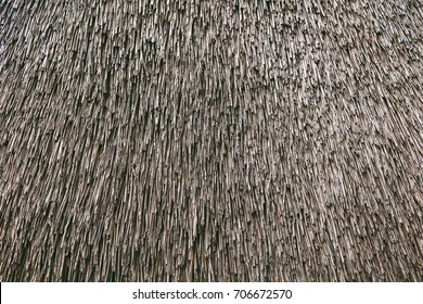 Dry cane background. Roof of a house of reed