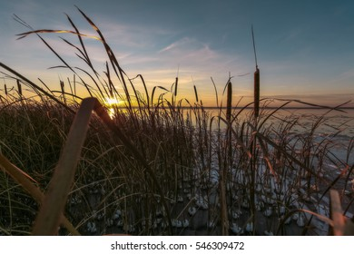 dry cane in ice and snow against the background of setting the sun on a winter decline in Pereslavl-Zalessky