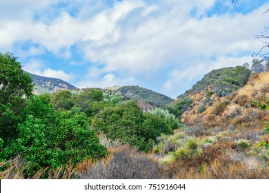 Dry chaparral along hiking trail in California mountains