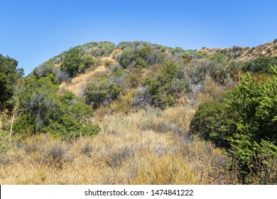 Dry chaparral from summer sunshine in Southern California hiking area on hot morning