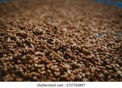 Dry coffee processing / Dry seed