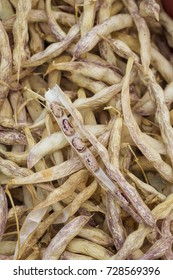 Dry colored beans in pods on a pile