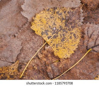 Dry colorful autumn leaves ideal for background and textures