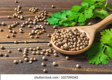 dry coriander seed spice and leaf or leaves on wood background