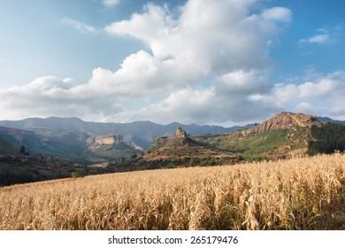 Dry corn field against mountains. Shot near Tsehlanyane Nature Reserve, Lesotho.