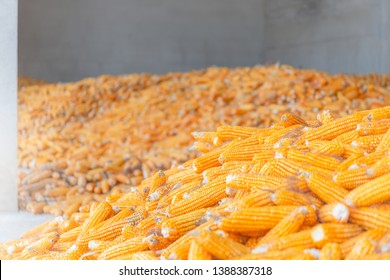 Dry corn store at mill storage, seed food industry concept