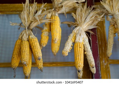 The dry corns hang near the wall