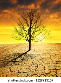 Dry country with cracked soil and barren tree at sunset. Global warming concept.