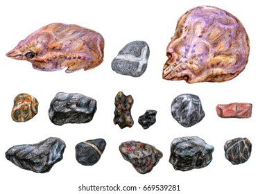 Dry crab shells and stones collection. Sea shore treasures. Color pencil drawn elements for design