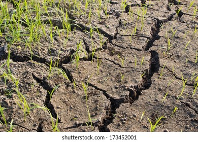 Dry crack earth at rice field in Thailand