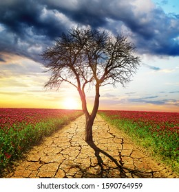 Dry cracked earth and dead tree in the middle of blooming field. Concept of change climate or global warming.