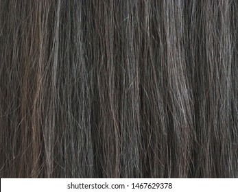 dry and damaged hair in asian woman use for shampoo product concept.