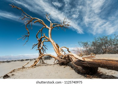 Dry dead tree in the Death Valley, USA