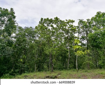 dry deciduous forest in rainy season