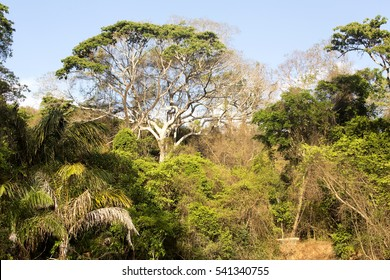 dry deciduous forest in the dry season, reserve Ankarana, Madagascar