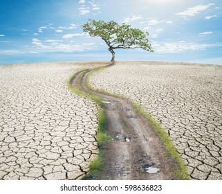 Dry desert landscape with big tree. Global warming concept