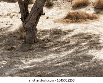 Dry desert scene with gnarled tree and deep shadows on sand dunes with tumbleweeds sepia colors suitable for use in background backdrop website presentation slides graphics invitations