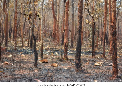 Dry dipterocarp forest in the dry season in Southeast Asia, Burma, Laos, Thailand, India, Cambodia, Indonesia