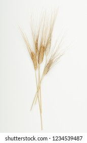 Dry ears of cereals in the beam on a white background. Top view, flat lay