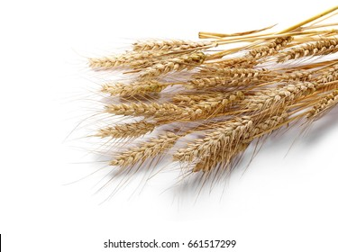 dry ears of wheat grain isolated on white background with clipping path