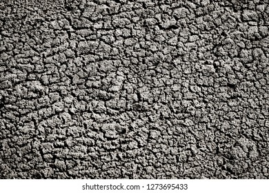 Dry earth texture in black white