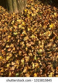 Dry fallen autumn leaves around a tree on the ground