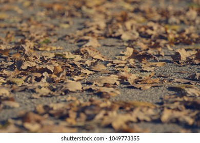 Dry fallen autumn leaves on the asphalt, warm colors, shot from low point, shallow depth of field, fall landscape