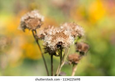 Dry, fallen flower close-up
