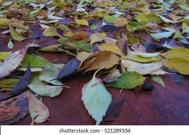 dry fallen leaves Italy autumn season